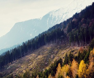 different colors, mount, and tree image
