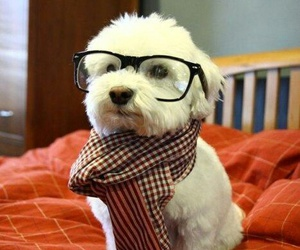 dog, hipster, and puppy image