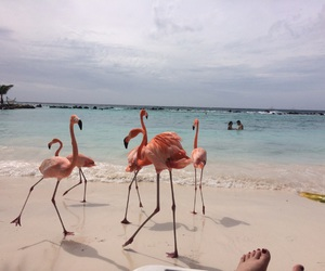 beach, flamingo, and nature image