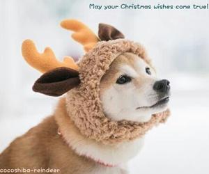 beautiful, christmas, and dog image