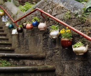 plants and pots image