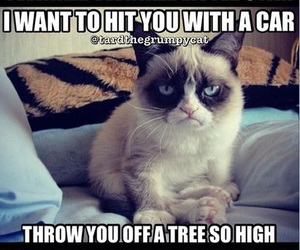 cat, funny, and grumpy cat image