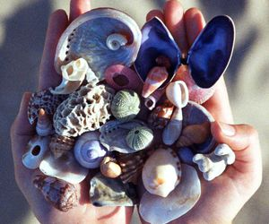 beach, summer, and shells image