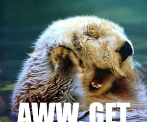 cute, funny, and otter image