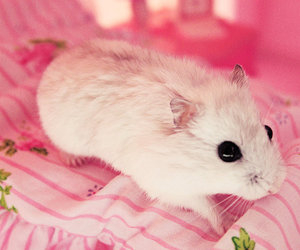hamster, mouse, and pink image
