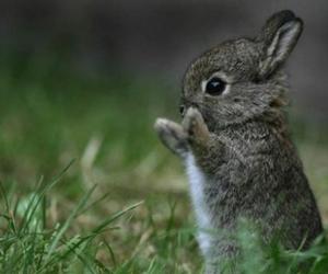 bunny, cute bunny, and rabbit image