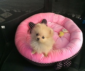 animal, dog, and lovely image