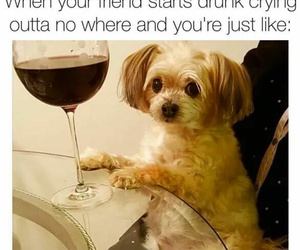 dog, drunk, and funny image