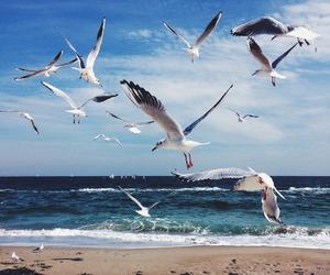 amazing, beach, and summer image