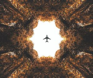 airplane, autumn, and fall image