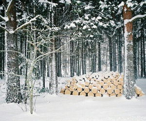 snow, winter, and woods image