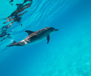 dolphin, animal, and blue image
