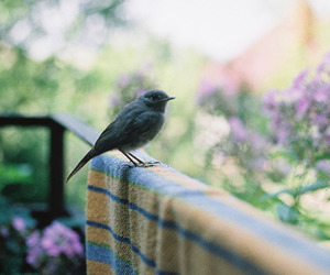 bird, vintage, and animal image