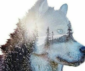 december, wolf, and winter image
