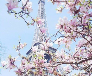beautiful place, sakura, and trees image