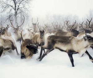 deers and pack. image