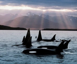 animal, whale, and beautiful image