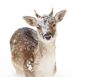 winter, animal, and snow image