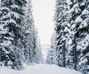 forest, wood, and snow image