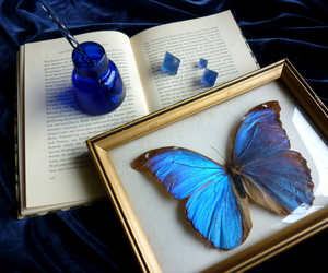 blue, butterfly, and color image