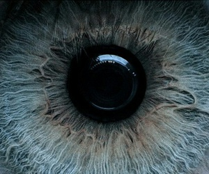 pair, blue, and eyes image