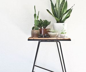 plants, green, and design image