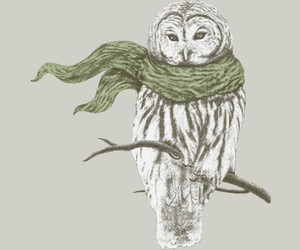owl, scarf, and winter image