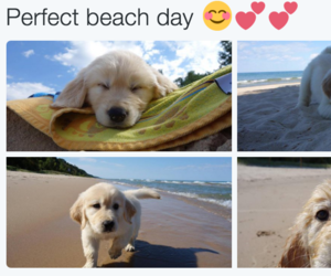 beach, dog, and pets image