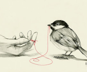 bird, hand, and red image