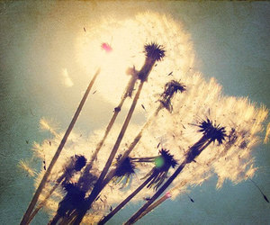 dandelion, make a wish, and wish image