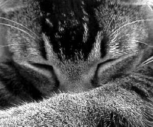 black and white, cat, and lovely image