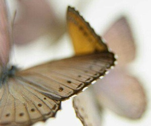 butterfly, photography, and white image