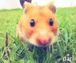 hamster and max image