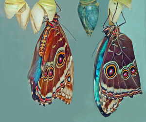 butterfly, cocoon, and nature image