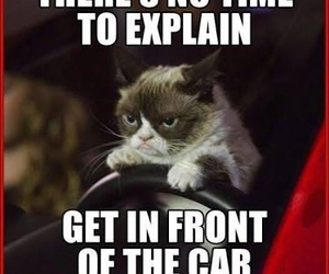 funny, grumpy cat, and lol image