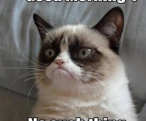 funny, lol, and grumpy cat image