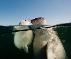 seal and water image