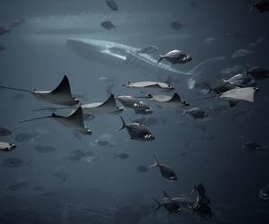 animals, fish, and shark image
