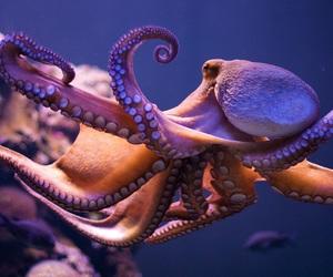 ocean, wildlife, and octopus image