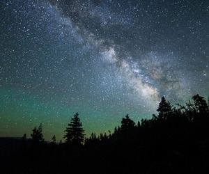 forest, light, and stars image