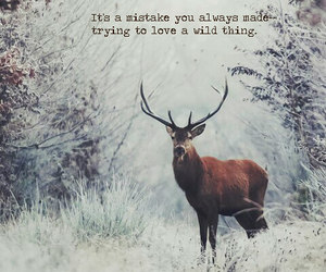 deer, forest, and quote image