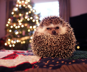 christmas, cute, and hedgehog image