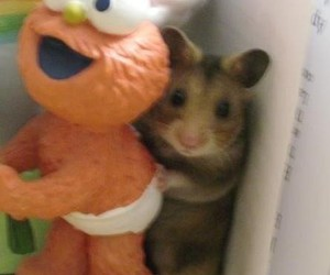 pac, hamster, and justin bieber image
