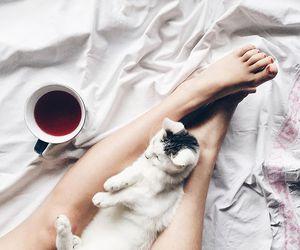 cat, tea, and cute image