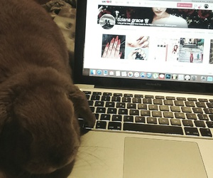 bed, bunny, and macbook image