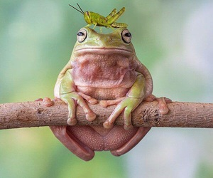 frog and animals image