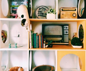 cat, colours, and Georgetown image