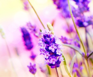 flowers, background, and lilac image