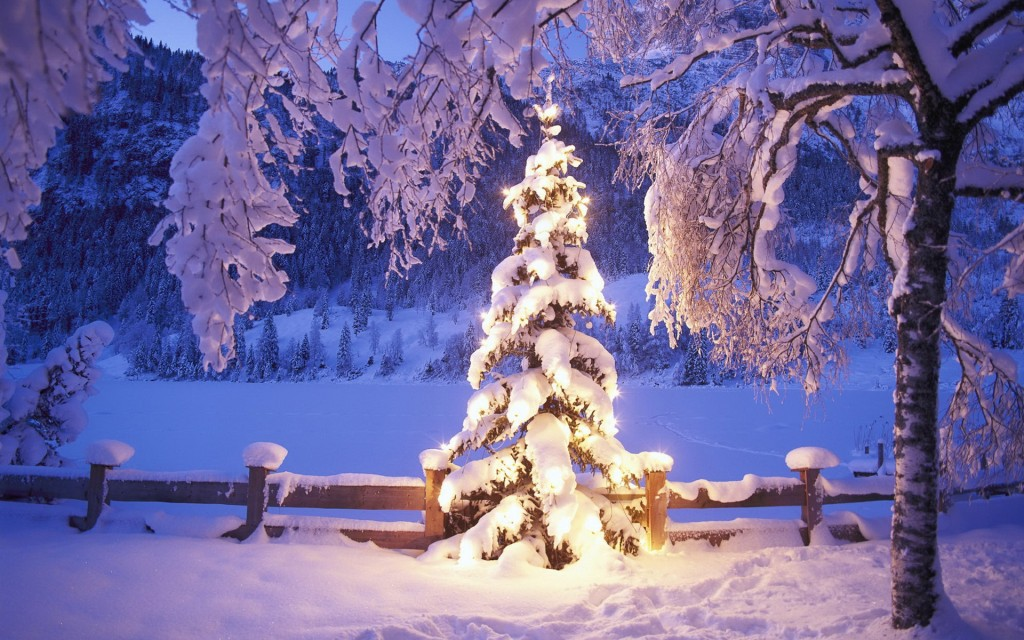 Christmas Tree Wallpaper 360 Wallpapers On We Heart It