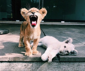 lion, white, and little image